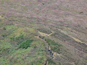 Photo: 茶臼山頂から日の出平 ミネザクラが満開!