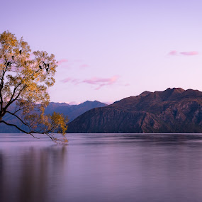 The Lone Tree of Wanaka by Linda Brown - Landscapes Waterscapes ( lake wanaka, new zealand, wanaka tree )