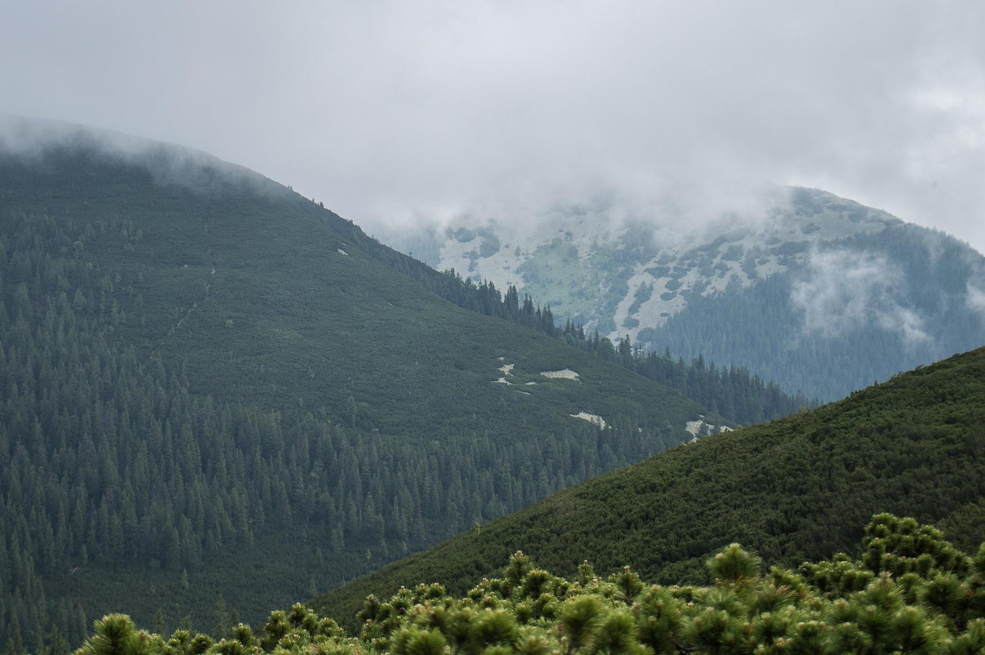 Туманні Горгани