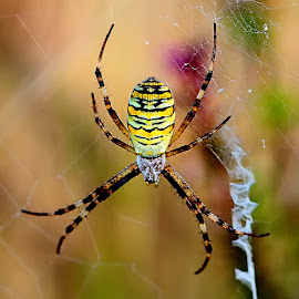 by Gérard CHATENET - Animals Insects & Spiders