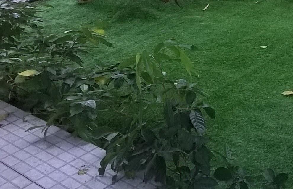 ngọn nguồn thảm sân golf và  giá bán thảm cỏ nhựa