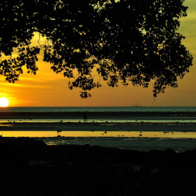 The Tree 2 by Dedi Ndoen - Landscapes Sunsets & Sunrises