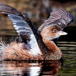 Bird 383~ by Raphael RaCcoon - Animals Birds