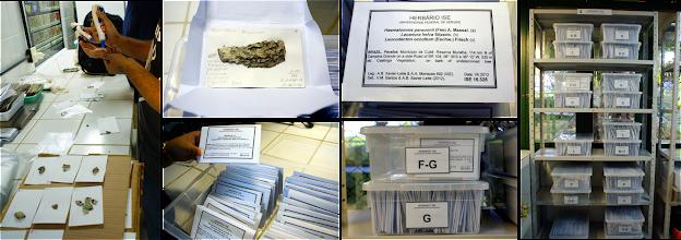 Photo: Detalhes da montagem, etiquetas e armazenamento das exsicatas no ISE – SE.