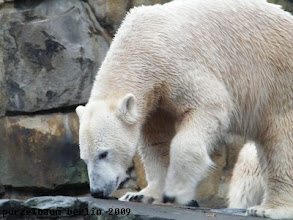 Photo: Das muss Knut beobachten ;-)