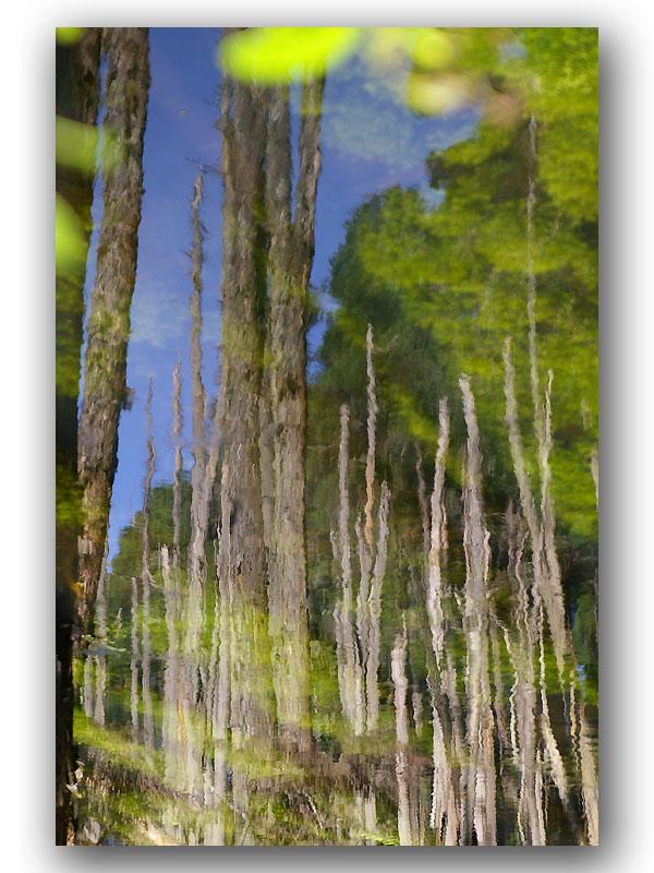 浮水印之忘憂森林