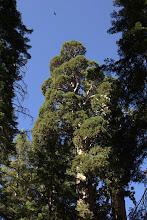 Photo: Raven and Sequoia