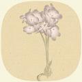 Florandom