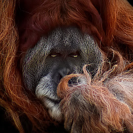 by Shawn Thomas - Animals Other Mammals