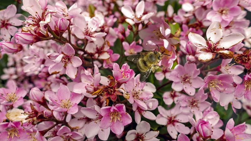 Danzando da fiore in fiore di lugiube