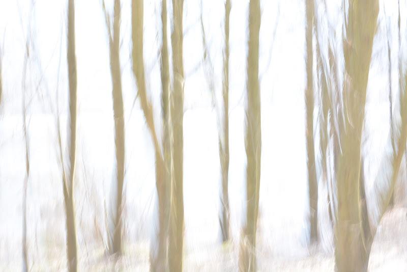 Pensieri che vagano liberi nel bosco di GiuseppeZampieri
