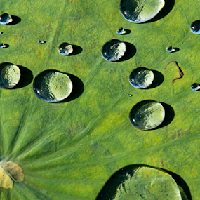 Water Drop on Lotus Leaf by Steven De Siow - Nature Up Close Natural Waterdrops ( abstract art, abstract, water, abstract photography, water drops,  )