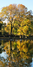 Photo: Geese landing in the golden reflection of autumn trees at Eastwood Park in Dayton, Ohio.