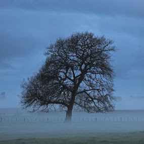 Morning Mist by Bryan Lowcay - Nature Up Close Trees & Bushes (  )