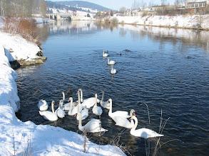 Photo: Zimná idylka na rieke Orava