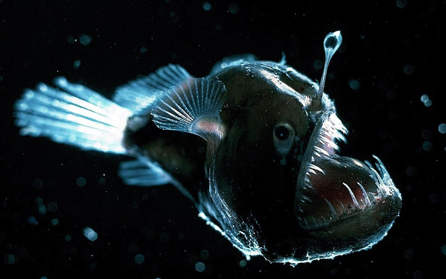 Angler fish live wallpaper android apps on google play for Majesty deep sea fishing