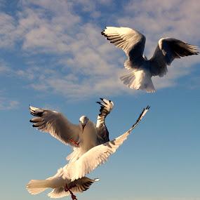 by Yvette O Beirne - Instagram & Mobile Android ( bird, flying, sky, gulls )