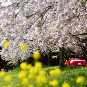 ボクスター (オープン)  2013年 Boxster Sのカスタム事例画像 師匠さんの2019年04月24日19:34の投稿