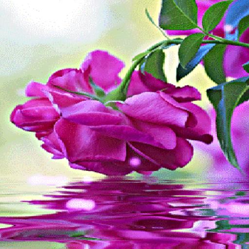 Purple Rose Swining LWP