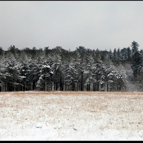 Treeline by Alex Newstead - Landscapes Forests ( contrast, england, uk, park, snow, white, forest, monotone, hampshire, black )