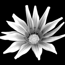 by Abdul Rehman - Black & White Flowers & Plants (  )