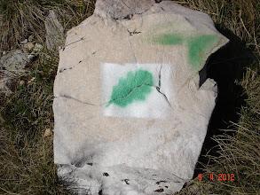 Photo: nove oznake do zaštićenih hrastova