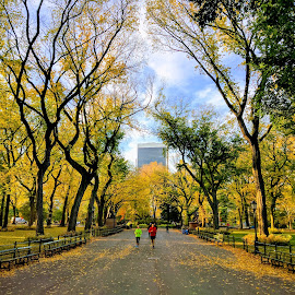 Fall Colors at Central Park, Manhattan by Souvik Roy - Instagram & Mobile Android (  )