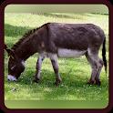 Tebak Gambar Hewan mamalia icon