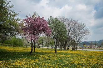 Photo: цветущий май перед грозой
