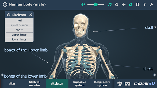 Human body (male) educational VR 3D 1.19 screenshots 3