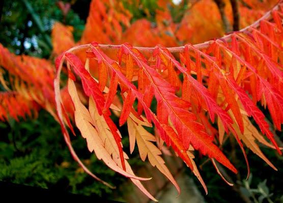 Autumn fire di bee_330