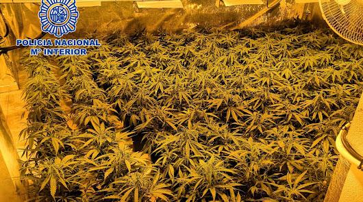 Imagen de una de las plantaciones encontradas por la Guardia Civil.