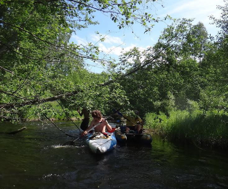прохождение нависающих над водой деревьев