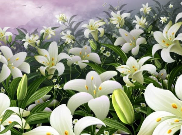 The History of the Easter Lily Native to Japan, Easter Lilies were imported to...