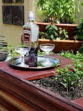 Photo: Triangular Triolife planter next to the bar--a nice compact planter for herbs.