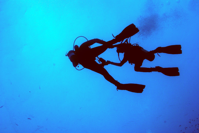 Photo: samesilhouetted divers as I began to surface