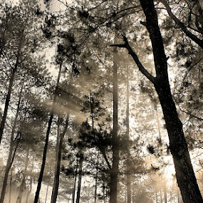 by Agung A - Landscapes Forests