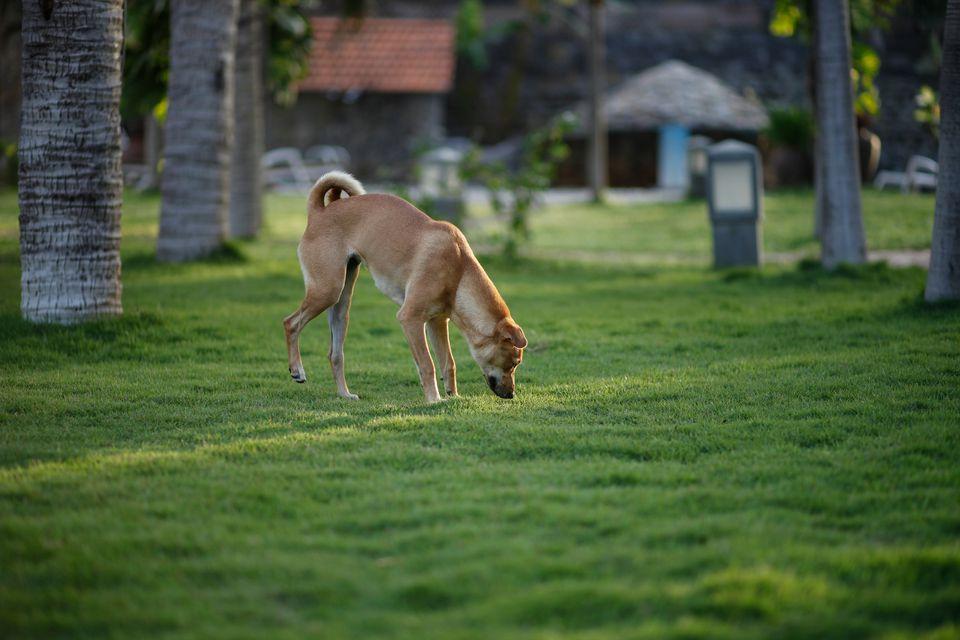 Dog Urine and Grass Damage