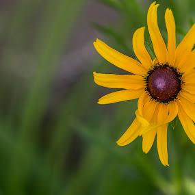 by Rajib Bahar - Flowers Single Flower