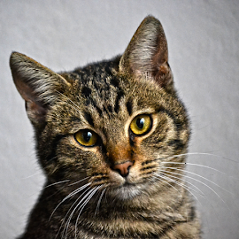 by Mario Denić - Animals - Cats Portraits ( cat, nature, photography, portrait, animal,  )