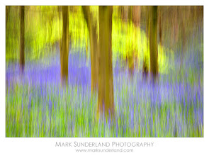 """Photo: Bluebells and Spring Trees  Here is one of my photographs that is often mistaken for a painting. I show it as a print on 100% cotton fine art paper so it does have a painterly feel to it and people often ask what medium I used. When I say """"photography"""" they don't believe me!  For the record, there is no manipulation here at the post-processing stage, the creative part was all done in-camera. Here I used a sweeping vertical movement of the camera with a more subtle side to side motion to achieve an impressionistic effect of the bluebells and spring trees in the woodland."""