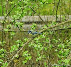Photo: Die Vögel erobern weiter den Garten