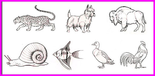 How To Draw Animals Step By Step 10 Android Download Apk