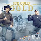 Ice Cold Gold