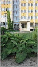 Photo: Str. Andrei Muresanu, spatiu verde, brusture  - 2017.06.09