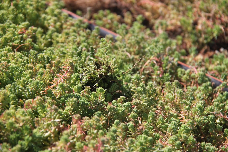 Vegetación de la cubierta vegetal