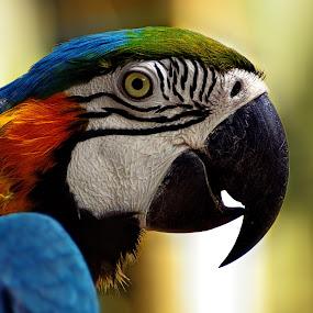 Macau by Franky Go - Animals Birds ( bird, macau, forest, pretty, animal )