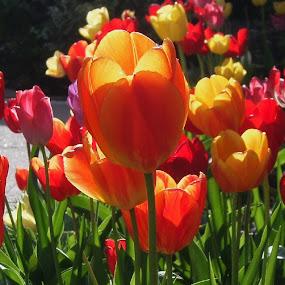 Flowers by Allmen Quester - Flowers Flower Gardens