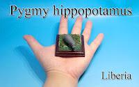 Pygmy hippopotamus -Liberia-