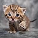 三百免费有趣的猫图片